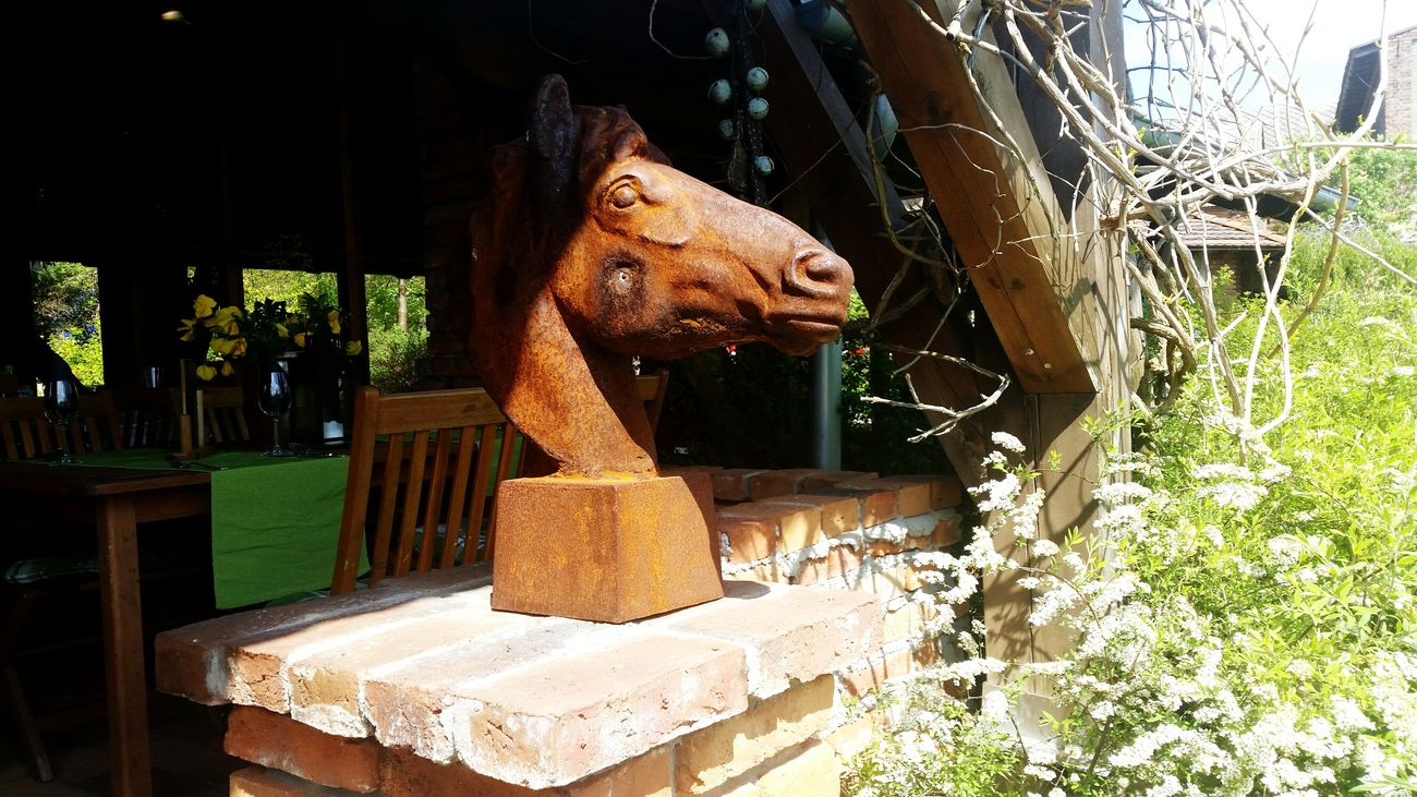 Horse Posing HEAD Good Father  Cottage In And Out EyeEm Best Shots Beautyineverything Garden Beautyful World Landscape_photography Whatever What Do You Think? Chilling Poland