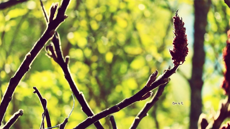 A tree Nature Plant Outdoors Branch Beauty In Nature Taking Photos Photography EyeEm Best Shots Eyeem Best Shot Nature