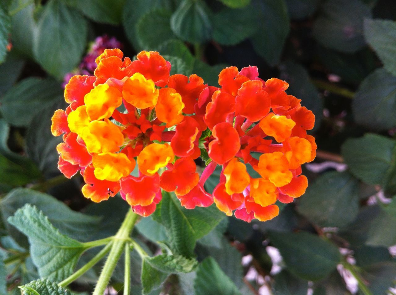 Yellow as the sun. Red like the heart Flower Nature Petal Plant Orange Color Flower Head Color Colors Flowers Flower Collection Flower Photography Floral Flowers_collection Flowers, Nature And Beauty Flowerphotography Photographer Photography Photograph