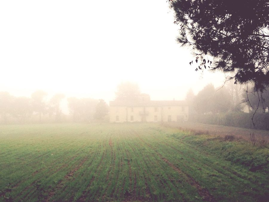 In this Villa lives the Ghost of a young Lady called La Ghilana presumed to be the Lover of Cesare Borgia 👻 Sofiavicchi Sofiavicchiconceptdesign Faenza Romagna Fog Autumn Autumn Colors Legends Nature EyeEm Nature Lover Folklore Nebbia Landscape Landscape_photography