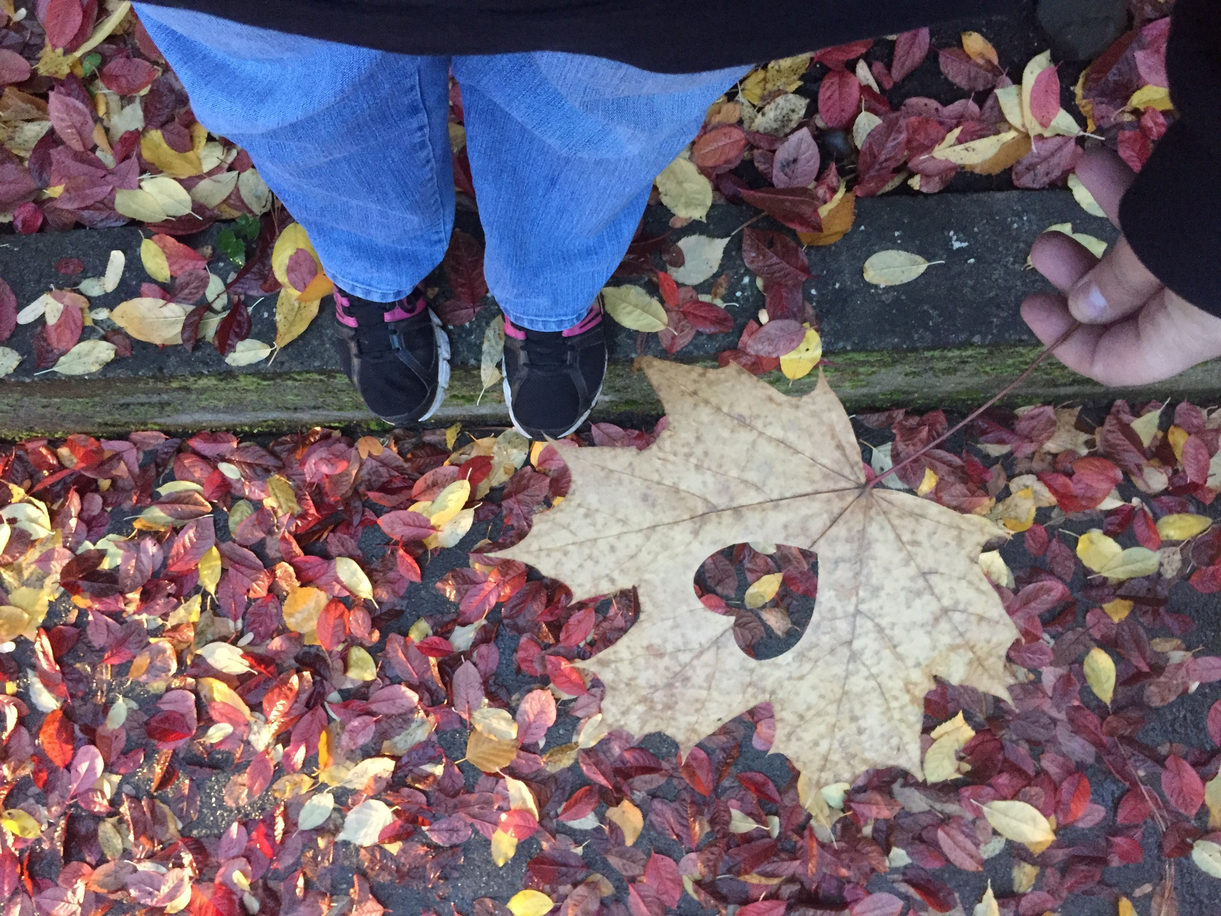 leaf, change, autumn, low section, real people, outdoors, human body part, one person, leaves, day, human leg, men, close-up, food, nature, beauty in nature, human hand, adults only, adult, people