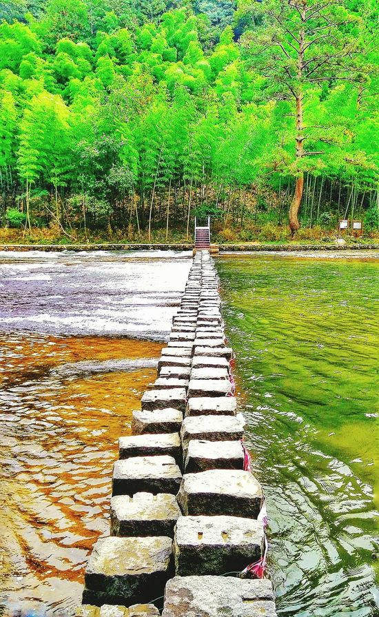 River River View Riverwalk River Collection Riverscape Leading Lines Steps On The Way To... On The Way To  On The River Green Greenery Bamboo Forest Landscape
