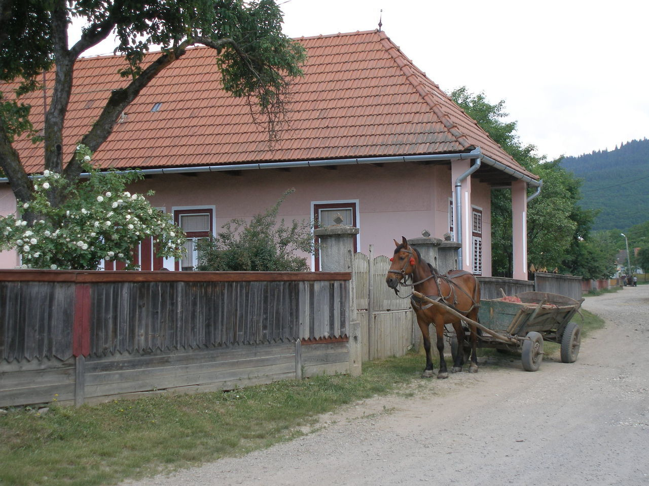 horse, horse cart, built structure, horsedrawn, architecture, domestic animals, building exterior, tree, animal themes, mammal, day, transportation, livestock, outdoors, no people, sky, nature