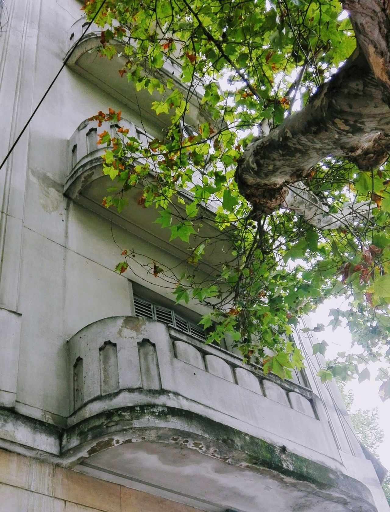 City Cityexplorer Urban Exploration Rationalism Architecture Tree Built Structure Green Color No People Growth Building Exterior Ivy Outdoors Day Creeper Plant Nature