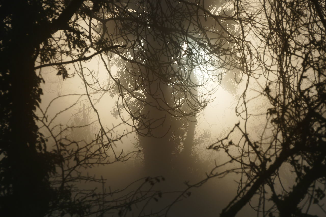 Foggy day.. Bare Tree Beauty In Nature Branch Day Dream States Ethereal Fog Foggy Foggy Weather Forest Low Angle View Nature No People Outdoors Scenics Silhouette Silhouette Silhouette_collection Sky Softness Tranquility Tree
