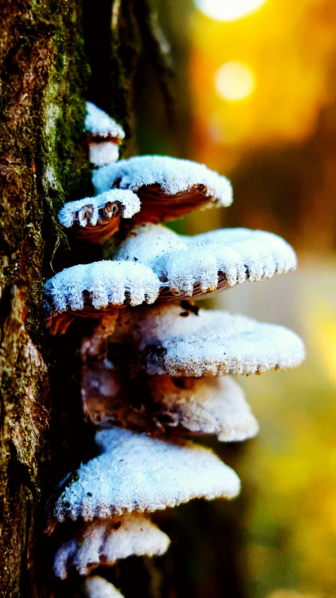 Mushroom Mushroom_pictures Mushrooms 🍄🍄 Mushrooms Magic. Mushroom Photography Mushrooms On A Tree Mushrooms Growing Wild Growth Beauty In Nature Complexity Outdoors Nature Textured  Colourful Multi Colored Beauty In Nature Winter Tree
