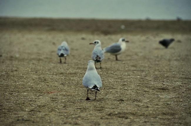 Seagull Seagulls Seagulls And Sea Iamgoingtolove Iamgoing Chao Odessa,Ukraine