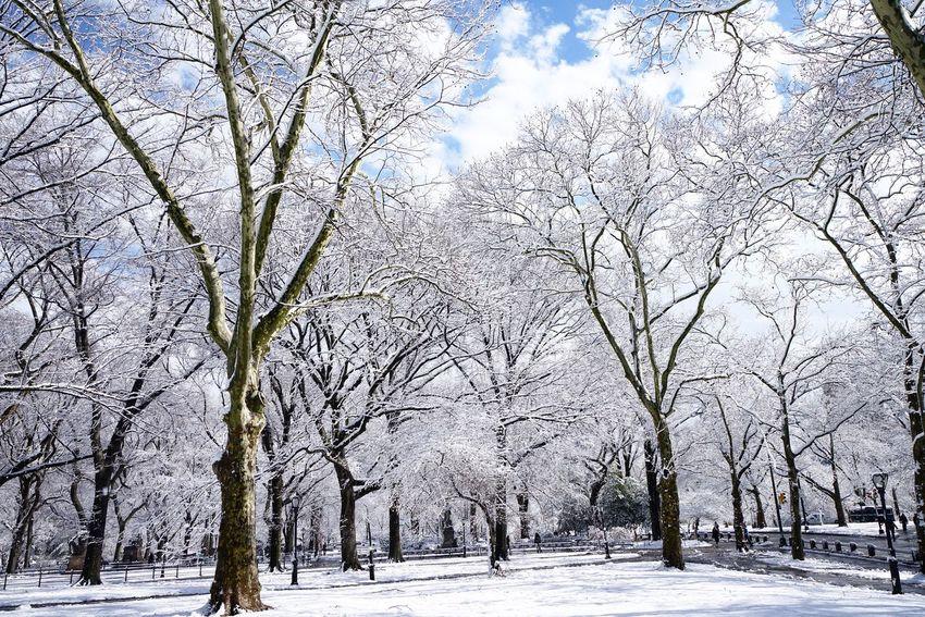 NYC NYC Photography Eyemphotography Manhattan Snow New York Snow ❄ Winter Wonderland