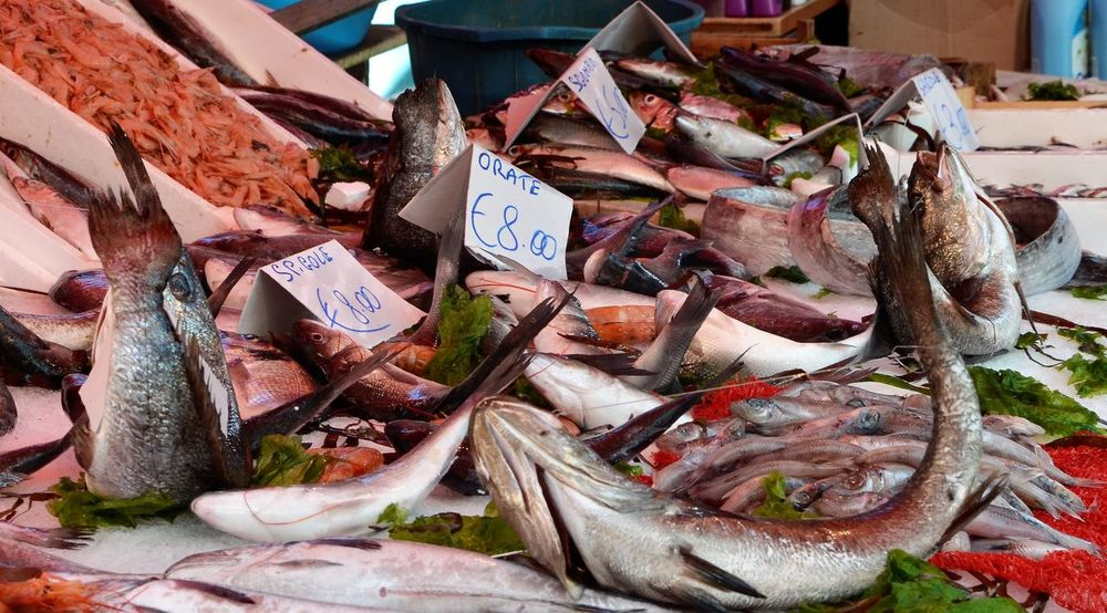 Lifestyles Open Air Market Italy Day Market Price Tag Market Stall Color Explosion Freshness Selling Fish W