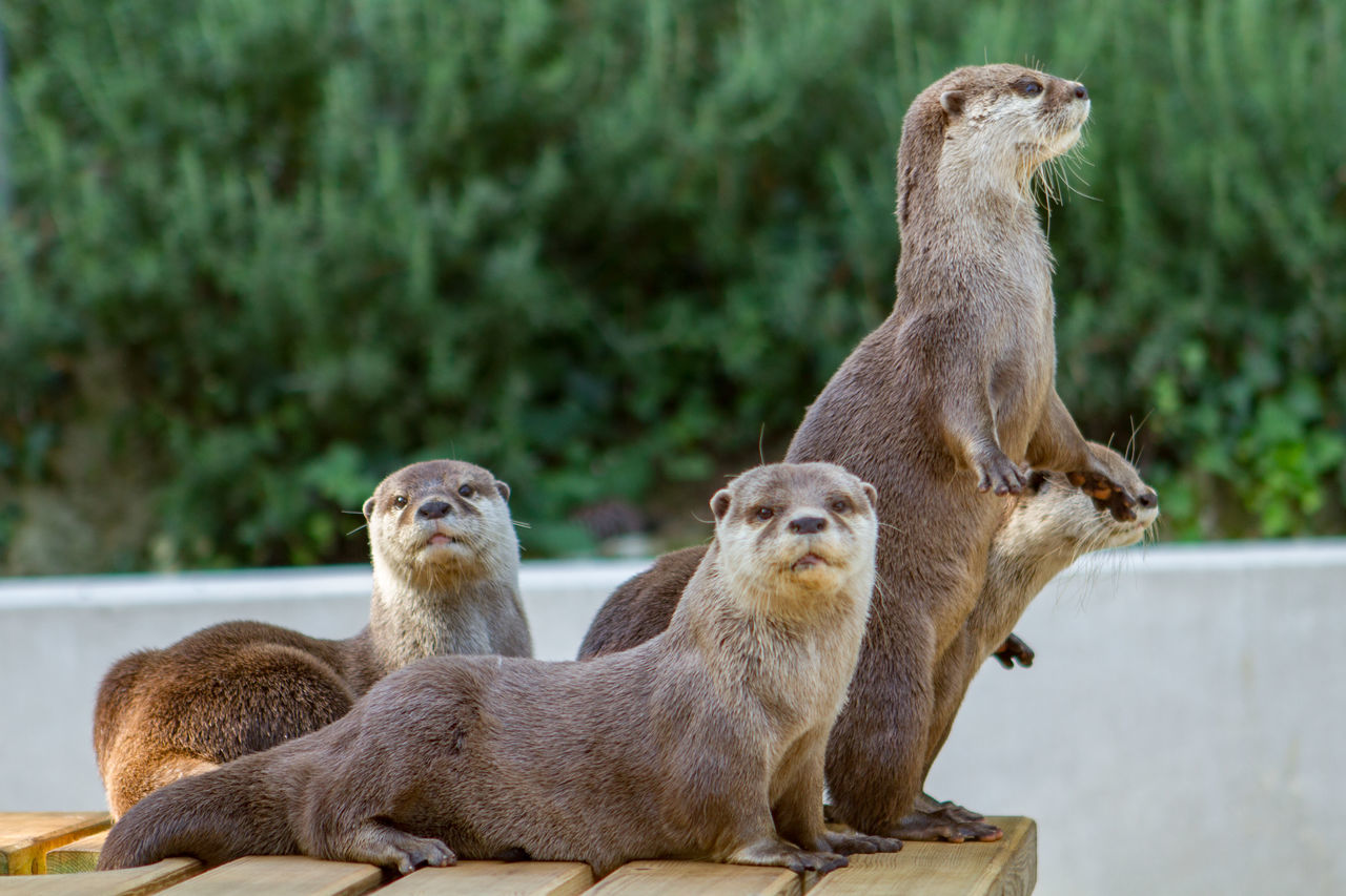View Of Otters In Zoo