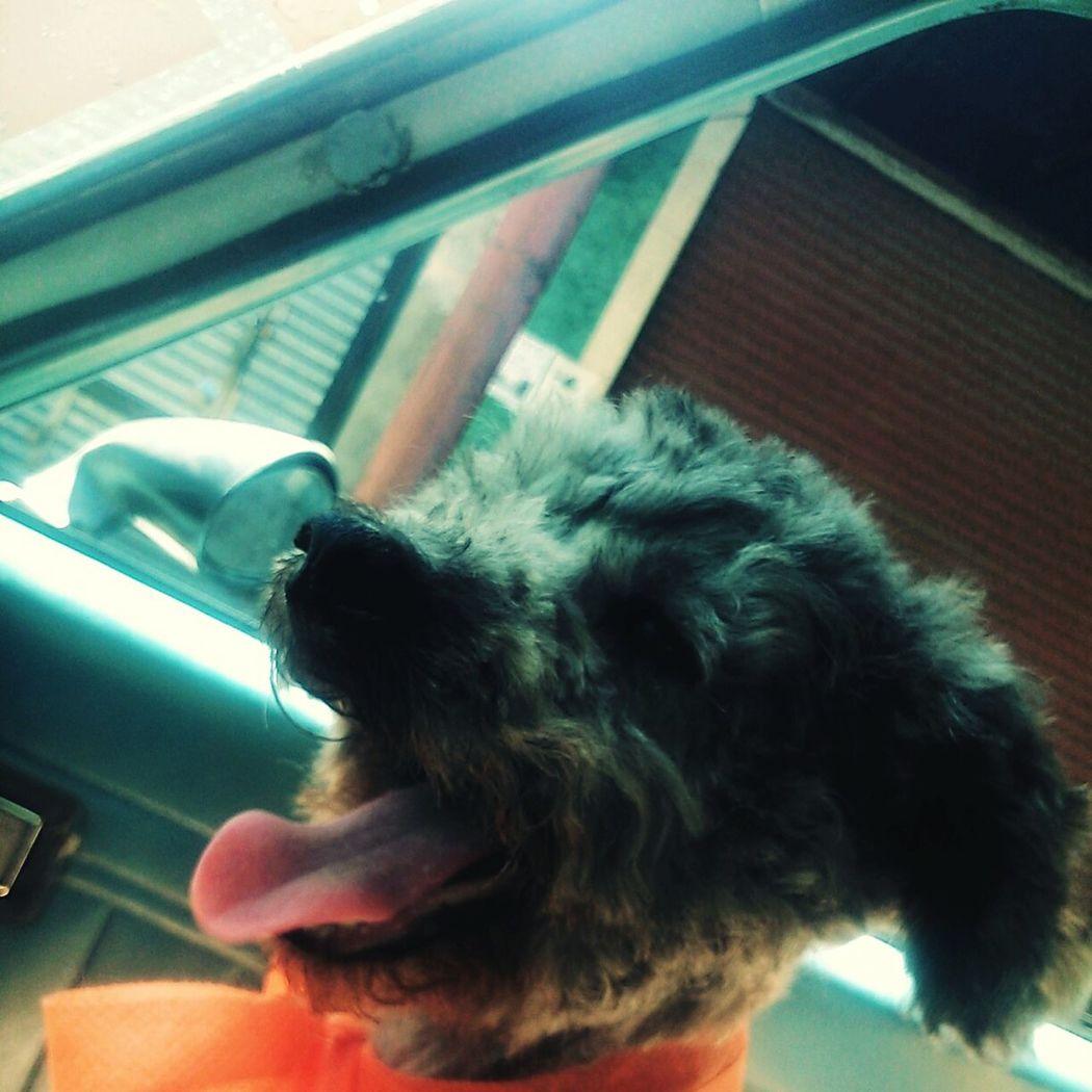 Rogelio Pretty Little Dog