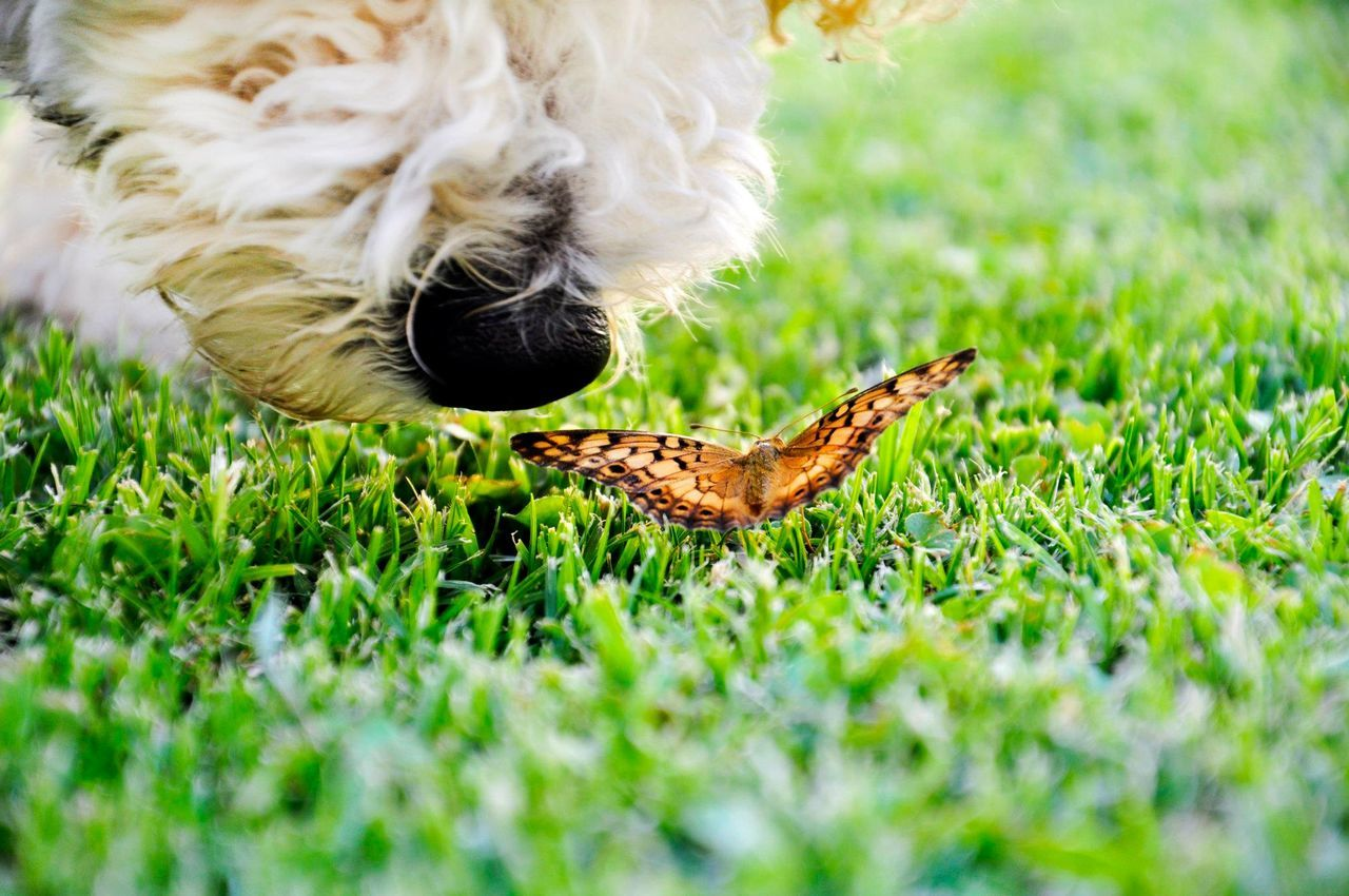 Beautiful stock photos of schmetterling, one animal, animal themes, grass, selective focus