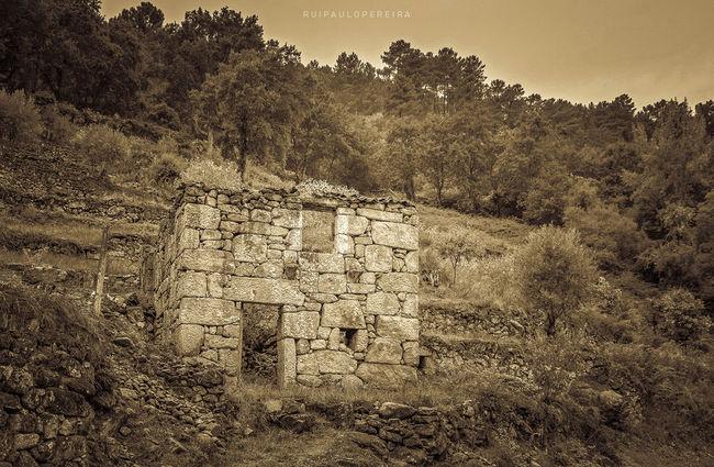 Abandonada Abandoned Casa De Pedra Casa Velha Douro  Memories Nature Old House Portugal Stone House Tree