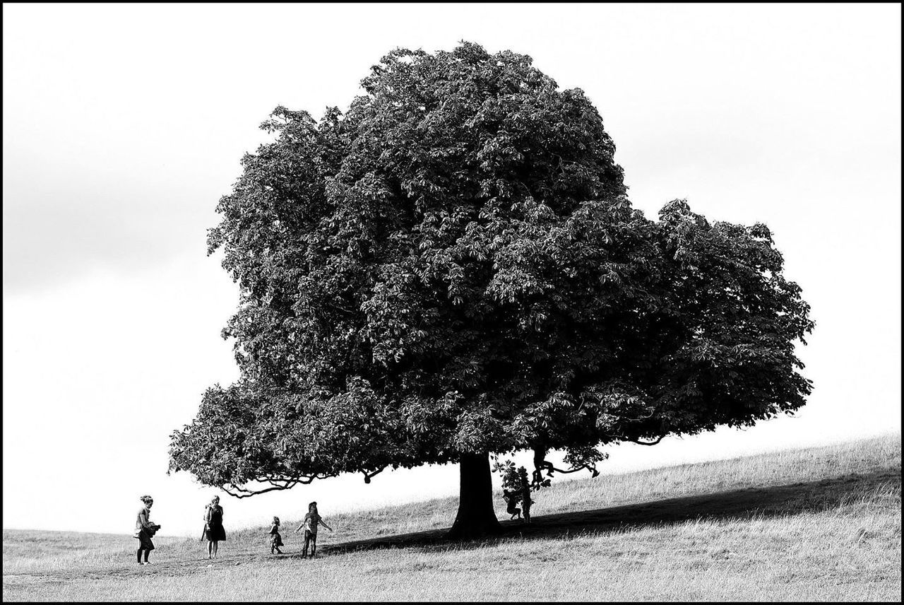 Bristol Tree Family
