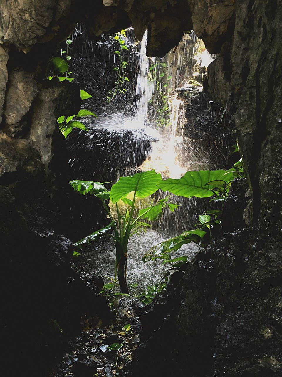 nature, waterfall, beauty in nature, forest, growth, tree, rock - object, plant, green color, tranquility, moss, motion, scenics, flowing water, tranquil scene, day, outdoors, no people, rock formation, idyllic, tree trunk, flowing, non-urban scene, lush foliage, non urban scene, green, remote, growing