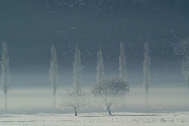 Schweiz Switzerland Wallis Leuk Bäume Trees Winter Wintertime Winter Wonderland Winter Trees Kalt Cold Cold Temperature Nebel Foggy Morning Ice Age