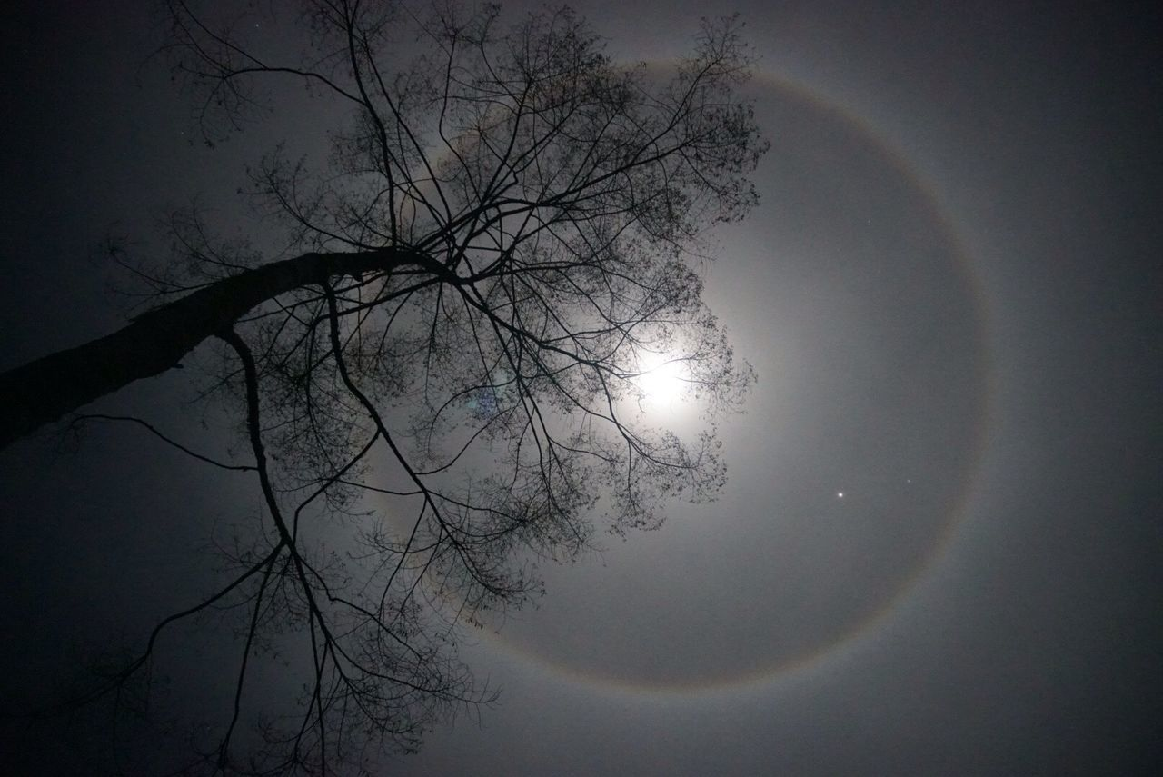 Moon Moonlight Star Milkyway Milky Way Galaxy Night Love Tree Hallo Moon Light Rainbow Sky Nite Stars Star - Space Stars & Dreams Starscape Skyscraper Sky And Clouds Sky_collection Skyporn Sky Collection Skylovers Starwars