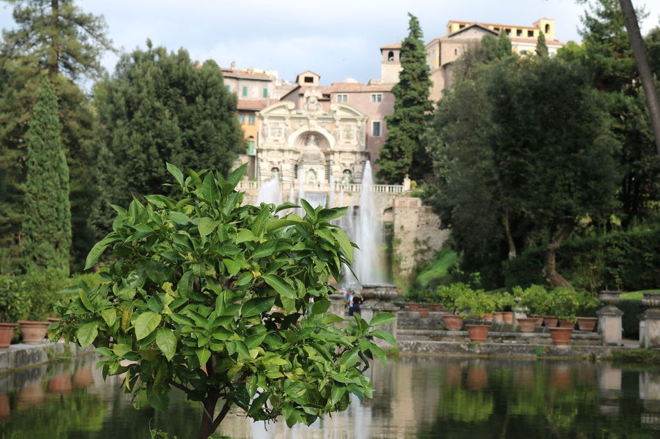 Tivoli, Villa D Este and Garden Architecture Beauty In Nature Building Exterior Built Structure Day Flowers,Plants & Garden Italy Nature No People Outdoors Sky Tivoli Tivoli Garden Tranquil Scene Tree Villa D'Este Water