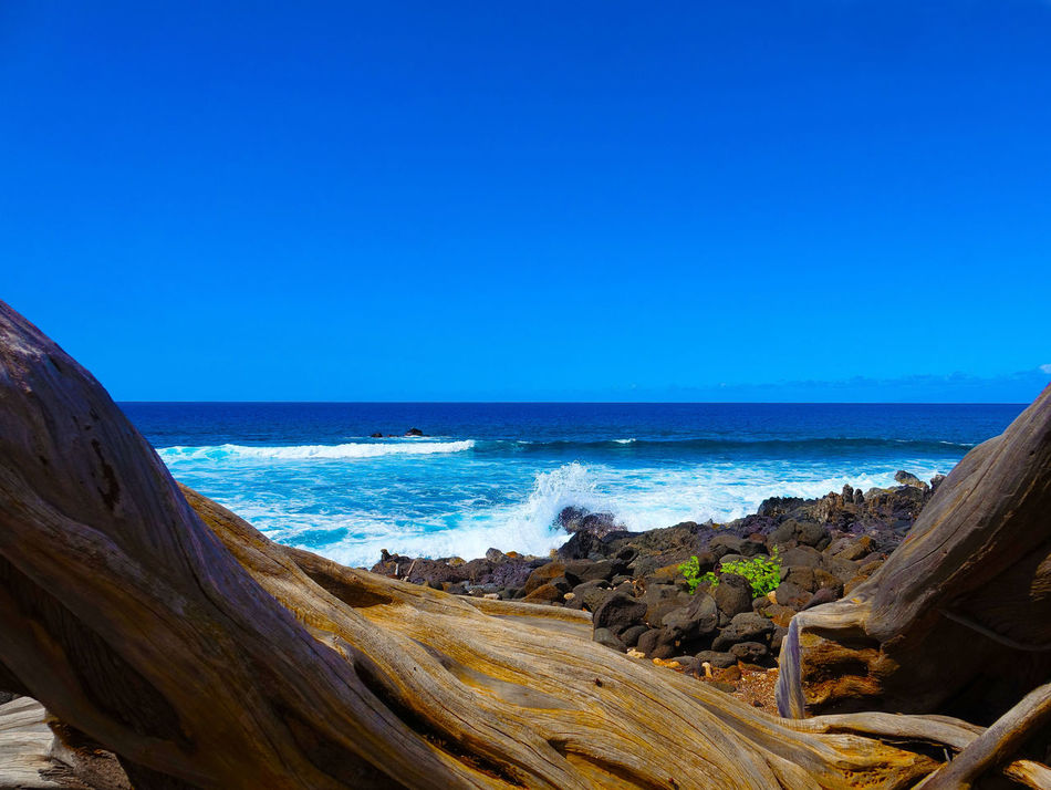 Beach Beauty In Nature Blue Clear Sky Coastline Day Drift Wood On Beach Horizon Over Water Nature No People Outdoors Sand Scenics Sea Sky Tranquil Scene Tranquility Water