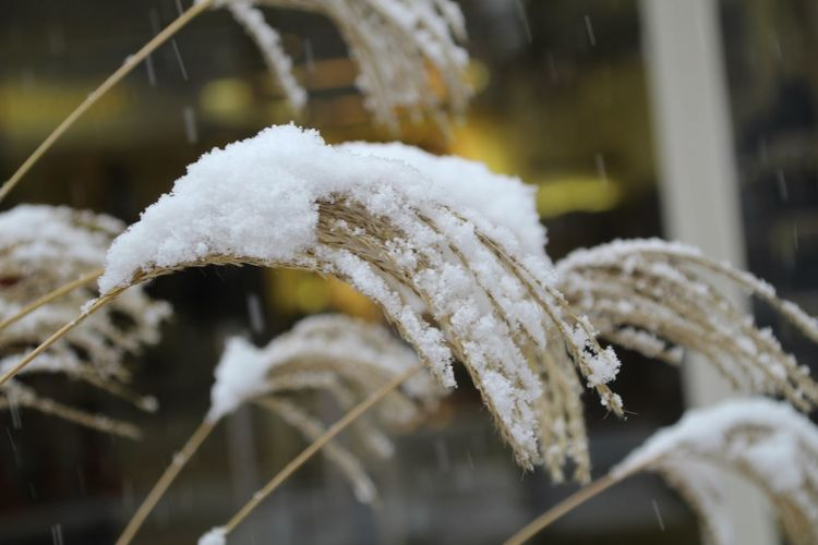 Winter Snow Cold Temperature Frozen White Color Close-up No People Day Outdoors Nature Snowflake