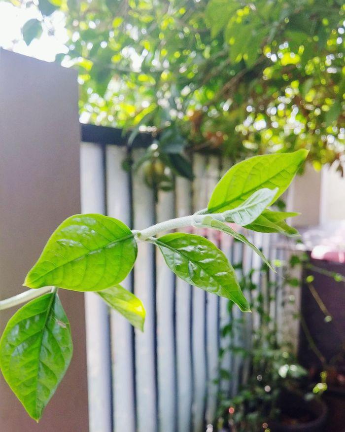 Green Leaf Nature_collection After Focus Pro Lemon Lime By Motorola