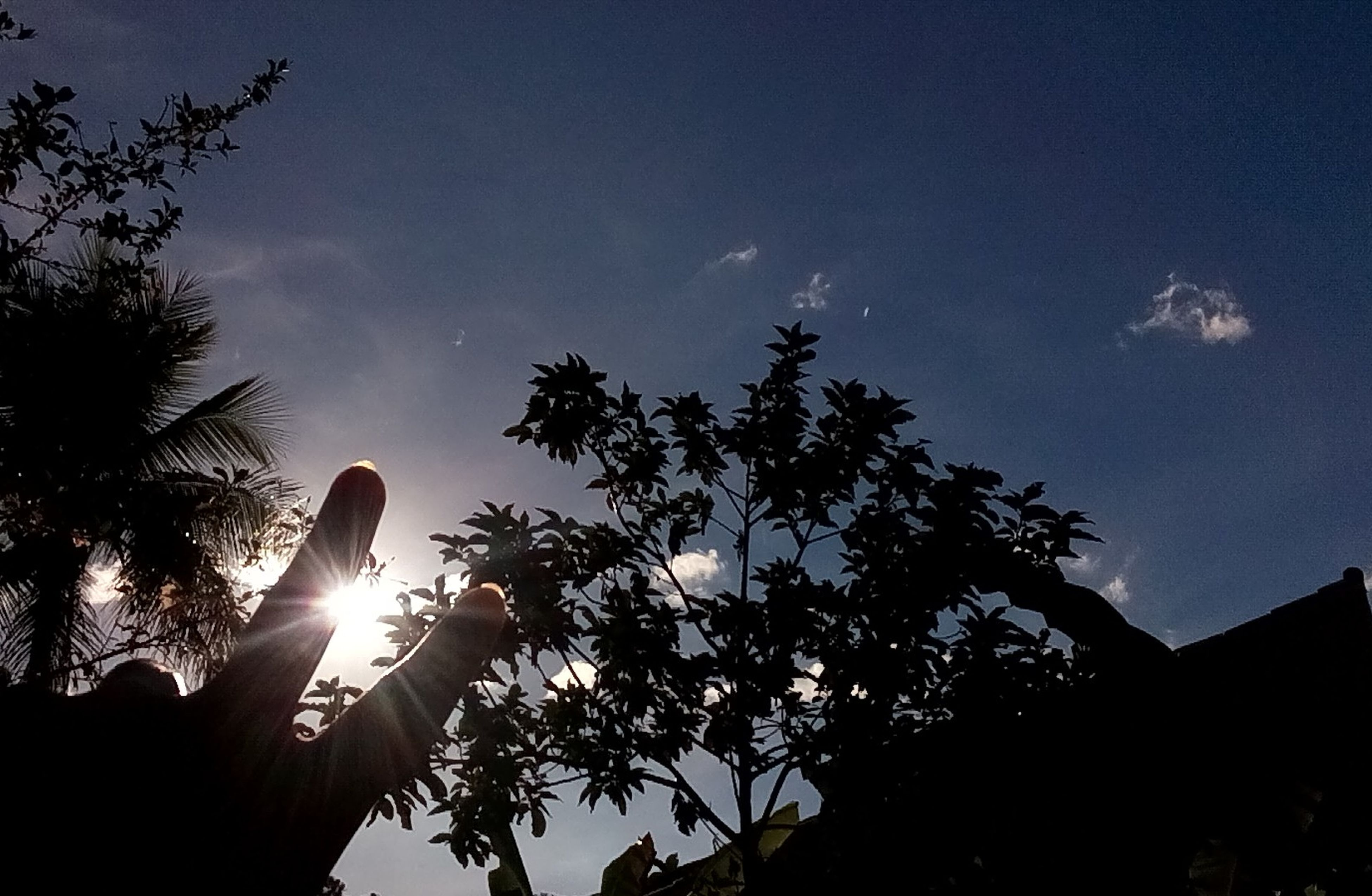 low angle view, tree, silhouette, sky, sun, nature, growth, outdoors, beauty in nature, moon, no people, branch