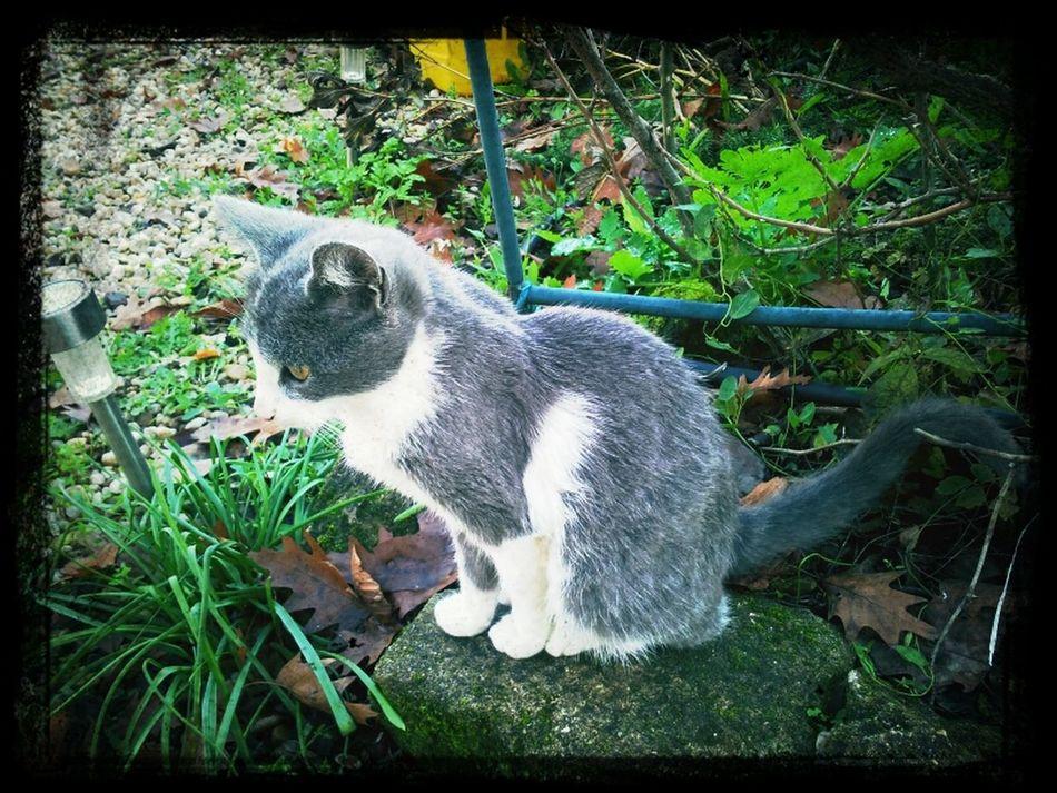 Cat Waiting France Animals Pets My Cat My Pet