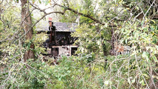 TakeoverContrast Architecture Abandoned Overgrown Building Exterior Growth Damaged Deterioration Outdoors Old House LFK