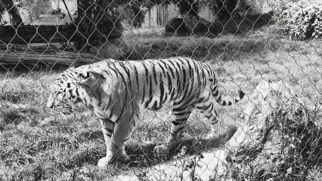 Shades Of Grey at Marwell Zoo