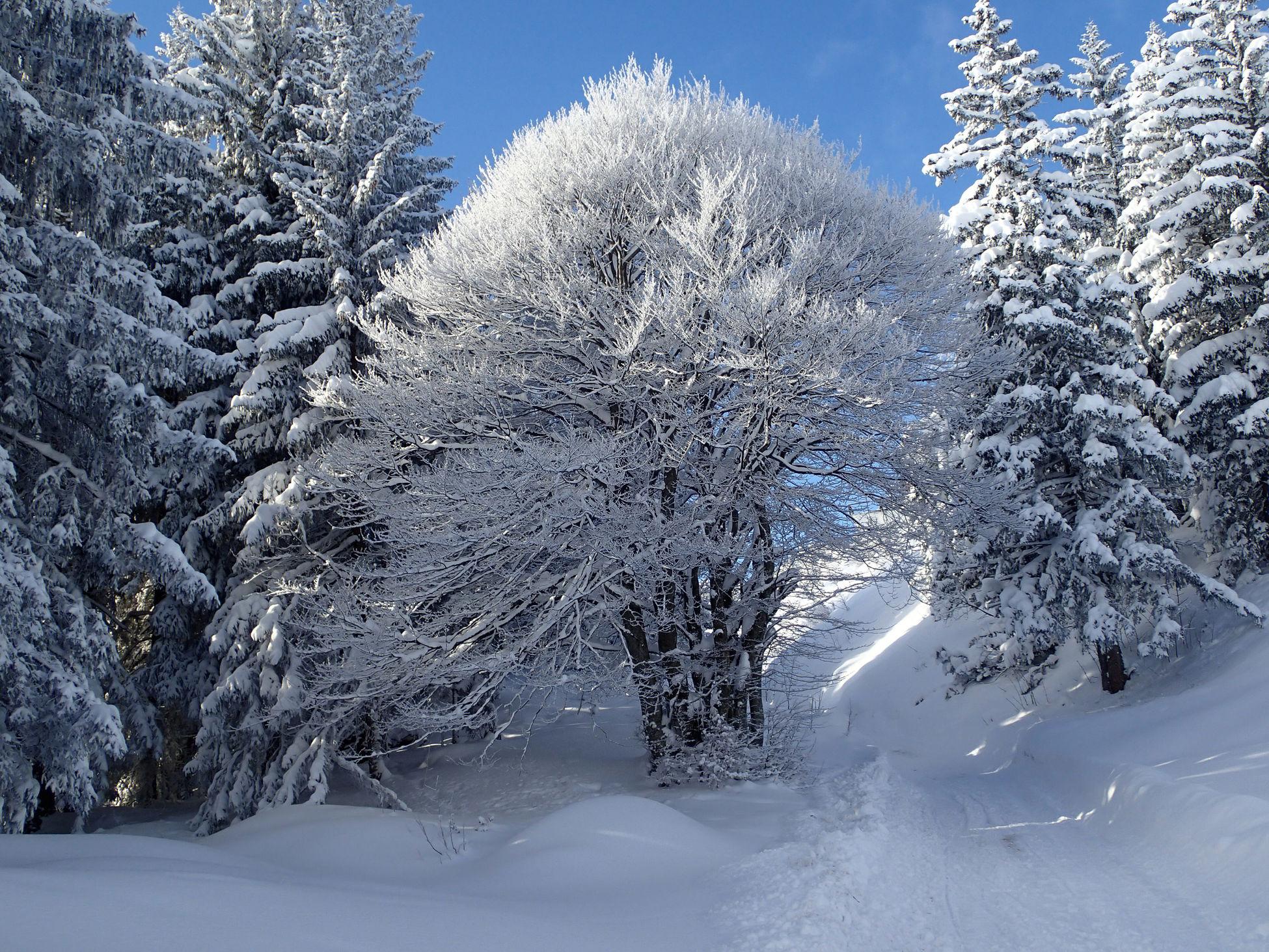 Snow Cold Temperature Winter Tree Nature Beauty In Nature Outdoors Hoher Kranzberg Tree With Snow Bäume Baum Mit Schnee EyeEmNewHere Olympus TG-2 Bavaria Bayern Deutschland Mountain Winter Wonderland Winter Trees