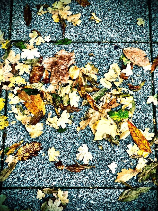 Autumn colours Autumn Colors