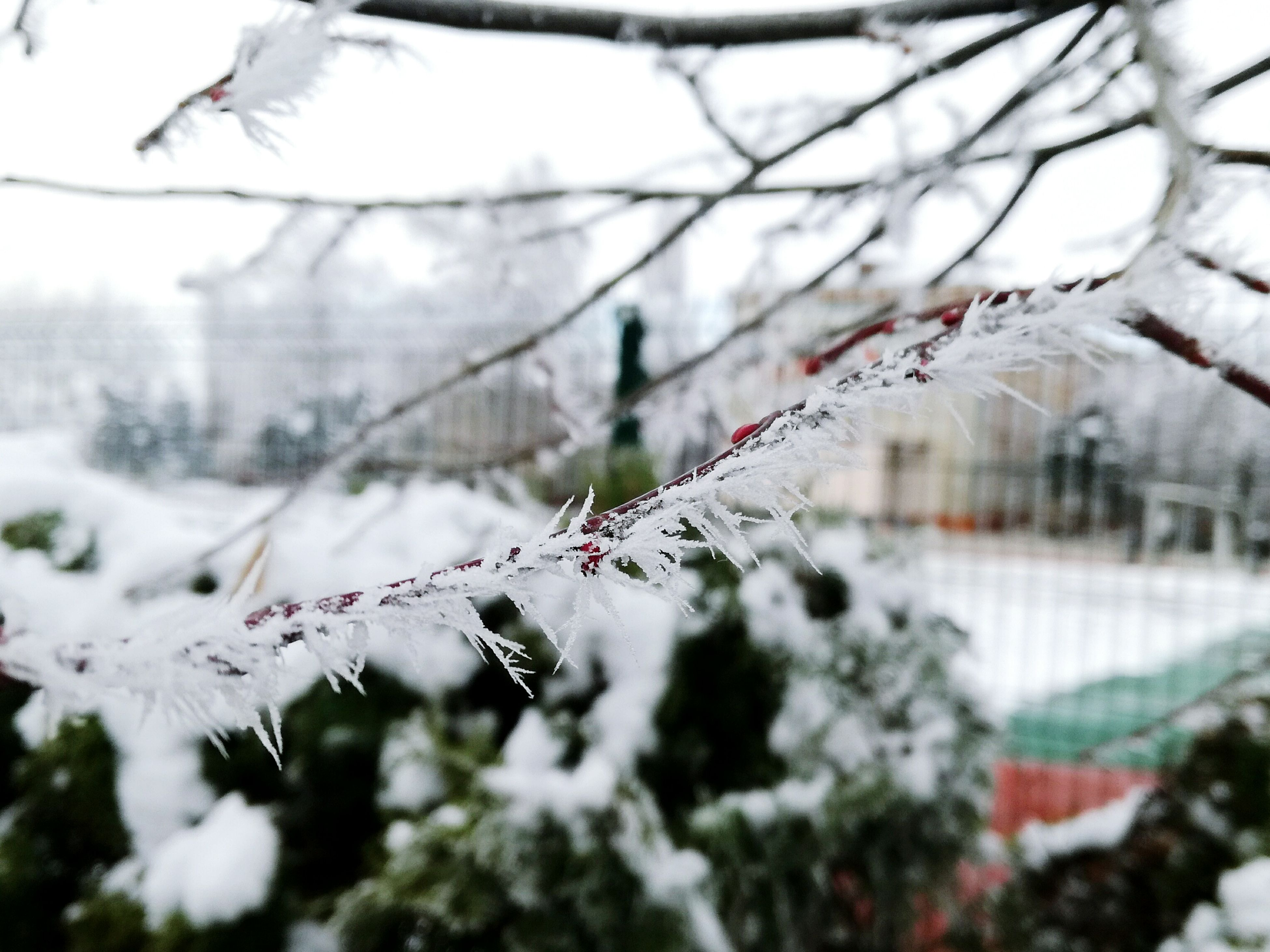 winter, cold temperature, snow, tree, growth, nature, no people, day, outdoors, branch, close-up, sky, beauty in nature