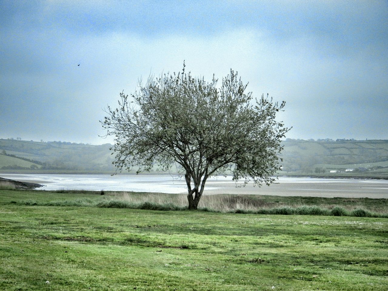 Wales Trees Green Seascape Landscape Taking Photos Photography Check This Out Countryside Hills