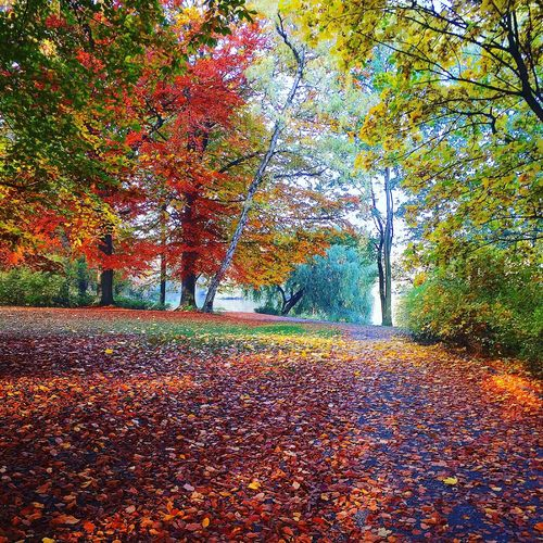 Change Autumn Tree Season  Leaf Beauty In Nature Scenics Tranquility Tranquil Scene Orange Color Falling Leaves Park - Man Made Space Nature Fallen Day Branch Non-urban Scene Outdoors