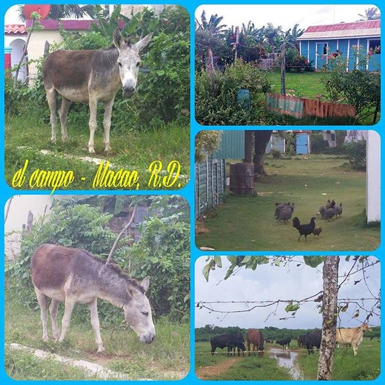What a beautiful day!!! Thoroughly enjoyed witnessing some of the natural beauty of this country! In the campo de Macao! This is where I first fell in love with this place! Donkeys, cows, and chickens OH MY! NaturalBeauty Godsbeauty Elmacao Elcampo Dominicanrepublic Paradise Ifellinlovehere Latepost