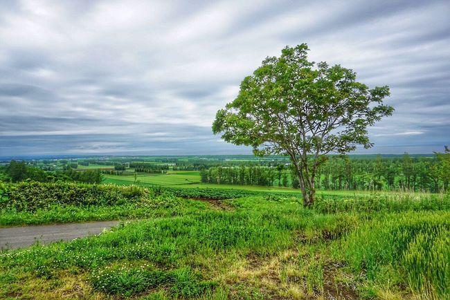 Countryside Hokkaido EyeEm Nature Lover TreePorn