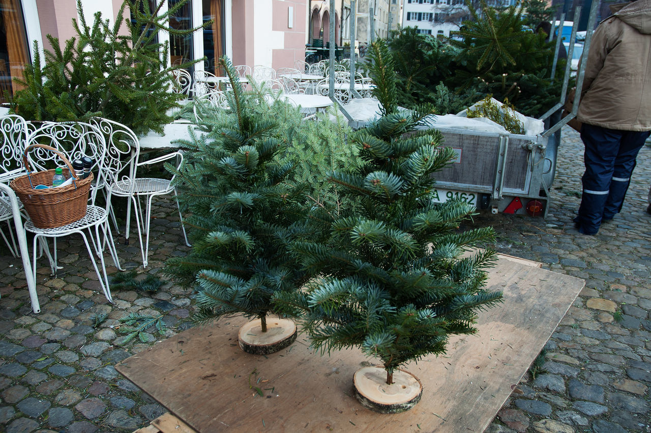 2007 Christmas Christmas Tree City City Life Day December Fir Tree Freiburg Germany Lifestyles Outdoors Plant Potted Plant Wochenmarkt Xmas Xmas Tree