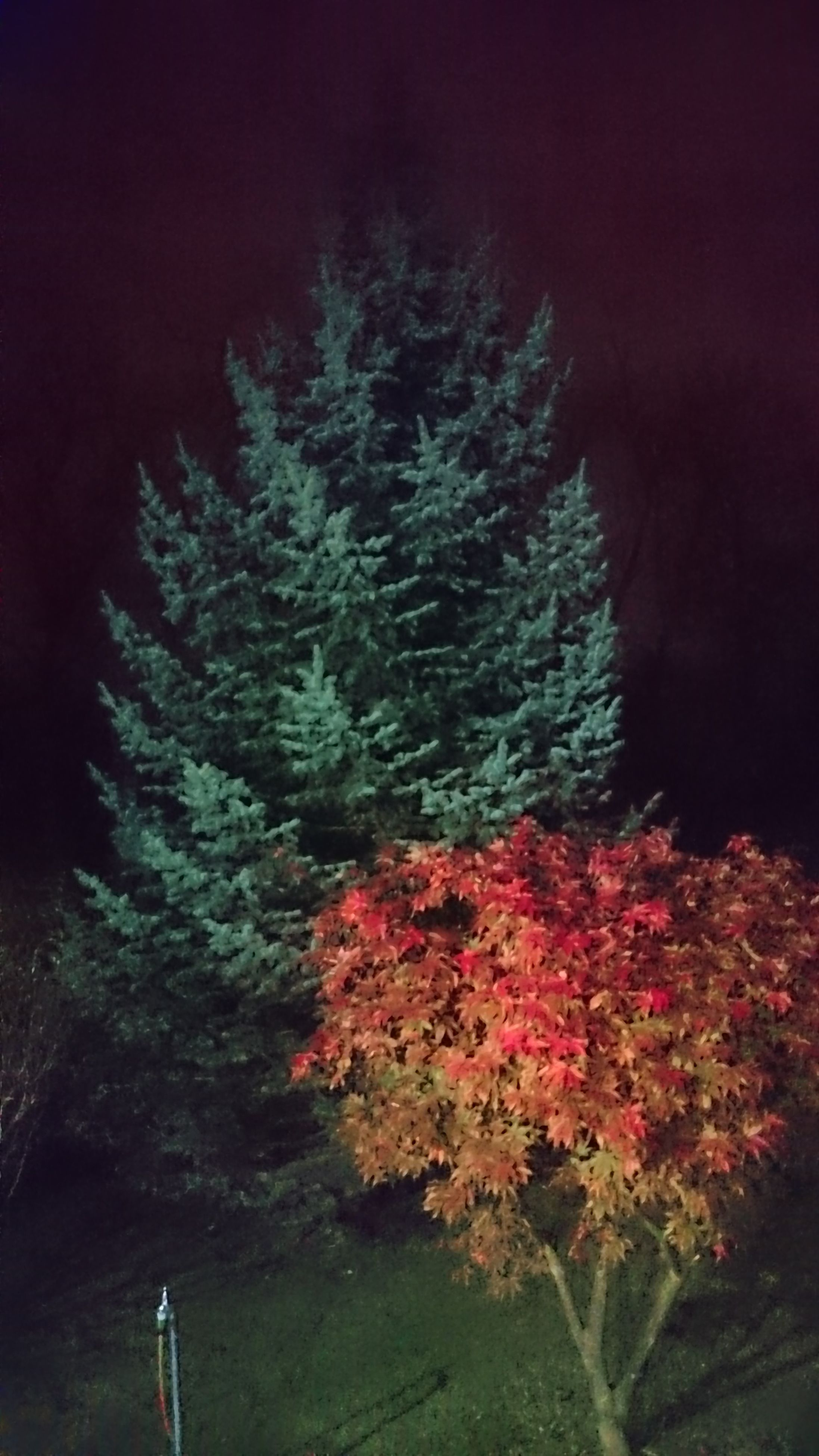 night, growth, flower, plant, nature, red, beauty in nature, tree, leaf, high angle view, no people, outdoors, dark, freshness, branch, green color, tranquility, orange color, illuminated