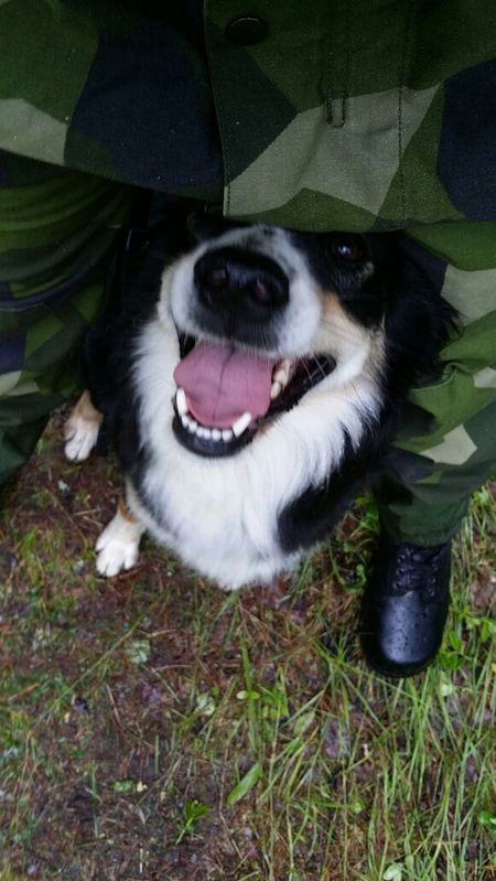 I'm going to make you to the best dog ever! Military Dog Training My Dog Is Cooler Than Your Kids My Love My Life