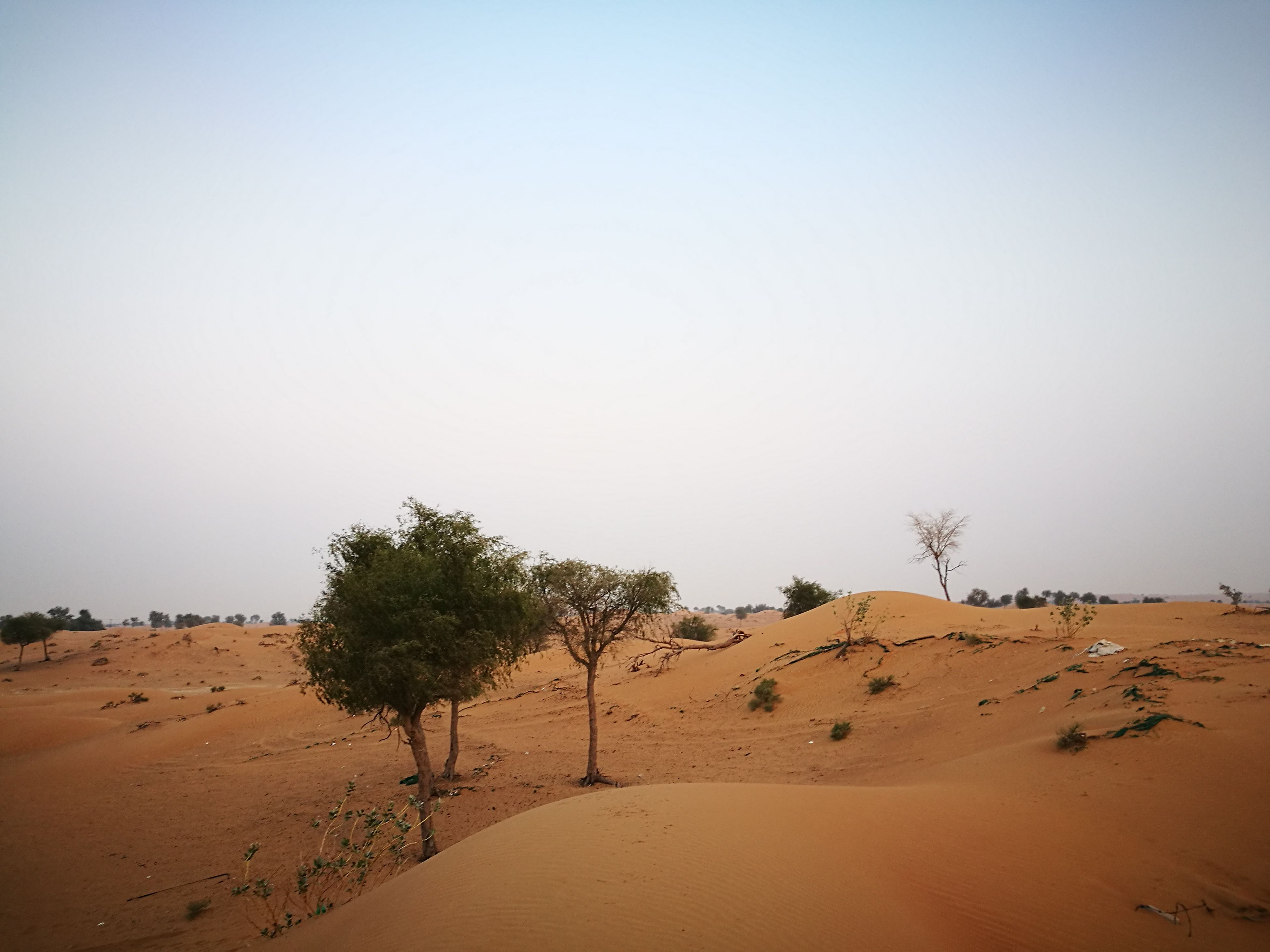 sand, nature, clear sky, beach, desert, tree, tranquil scene, beauty in nature, no people, tranquility, outdoors, sand dune, arid climate, day, sky
