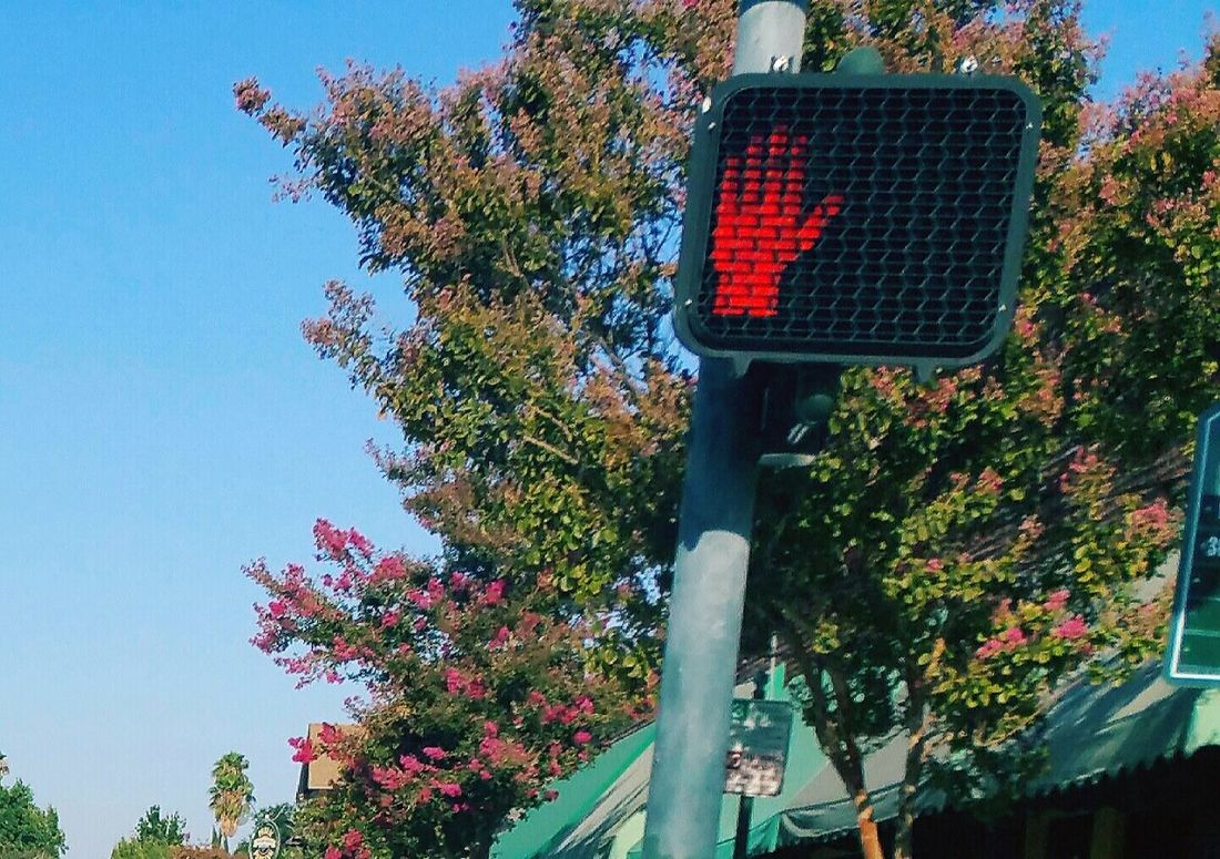 Stop Hand Signal Growth Tree Low Angle View Sky Nature No People Outdoors Day Technology Beauty In Nature Stoplight City EyeEm Best Shots The City Light Red Light Road Signal On The Move Road Connection Traffic Transportation Copy Space Modern