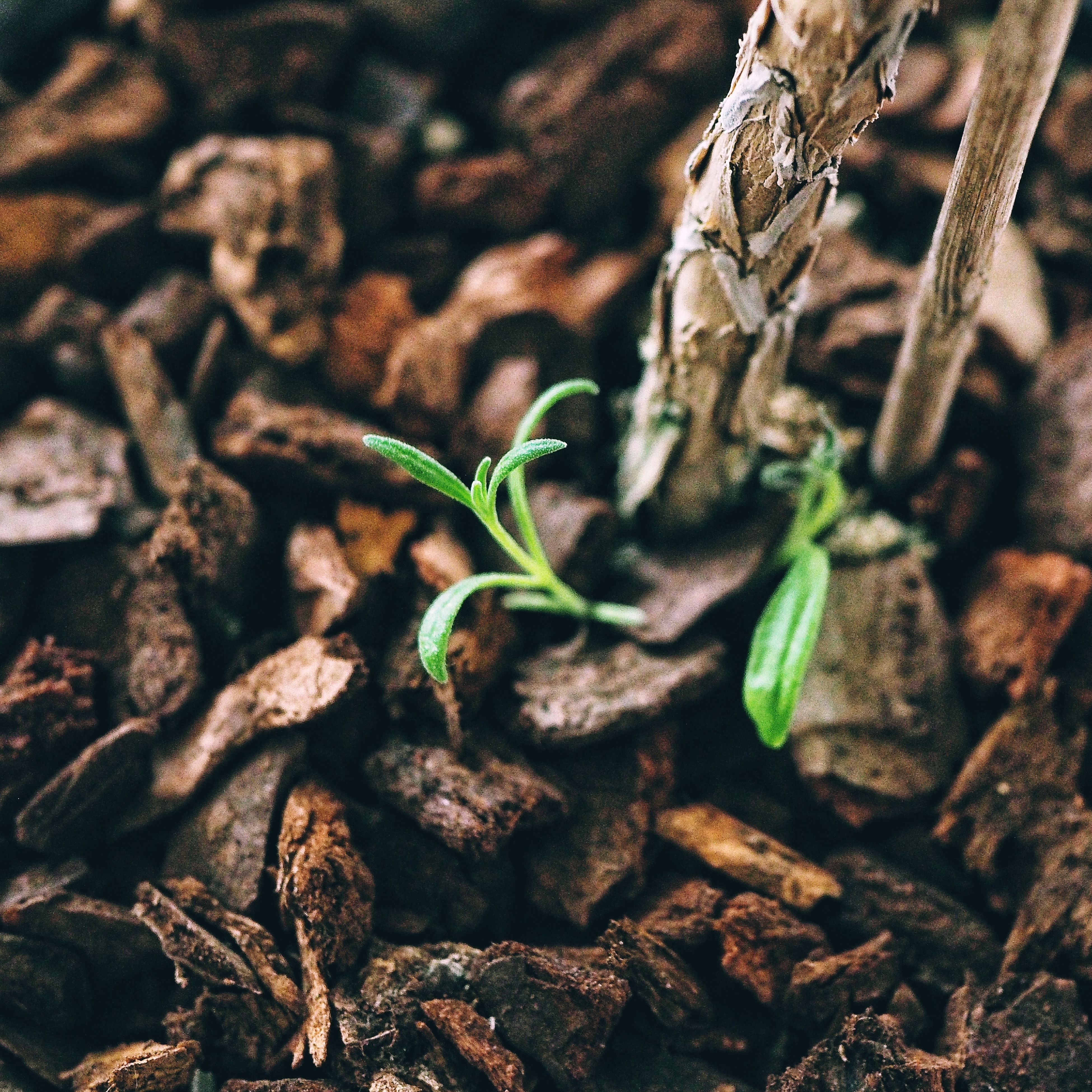 leaf, plant, growth, nature, no people, close-up, fragility, freshness, outdoors, day