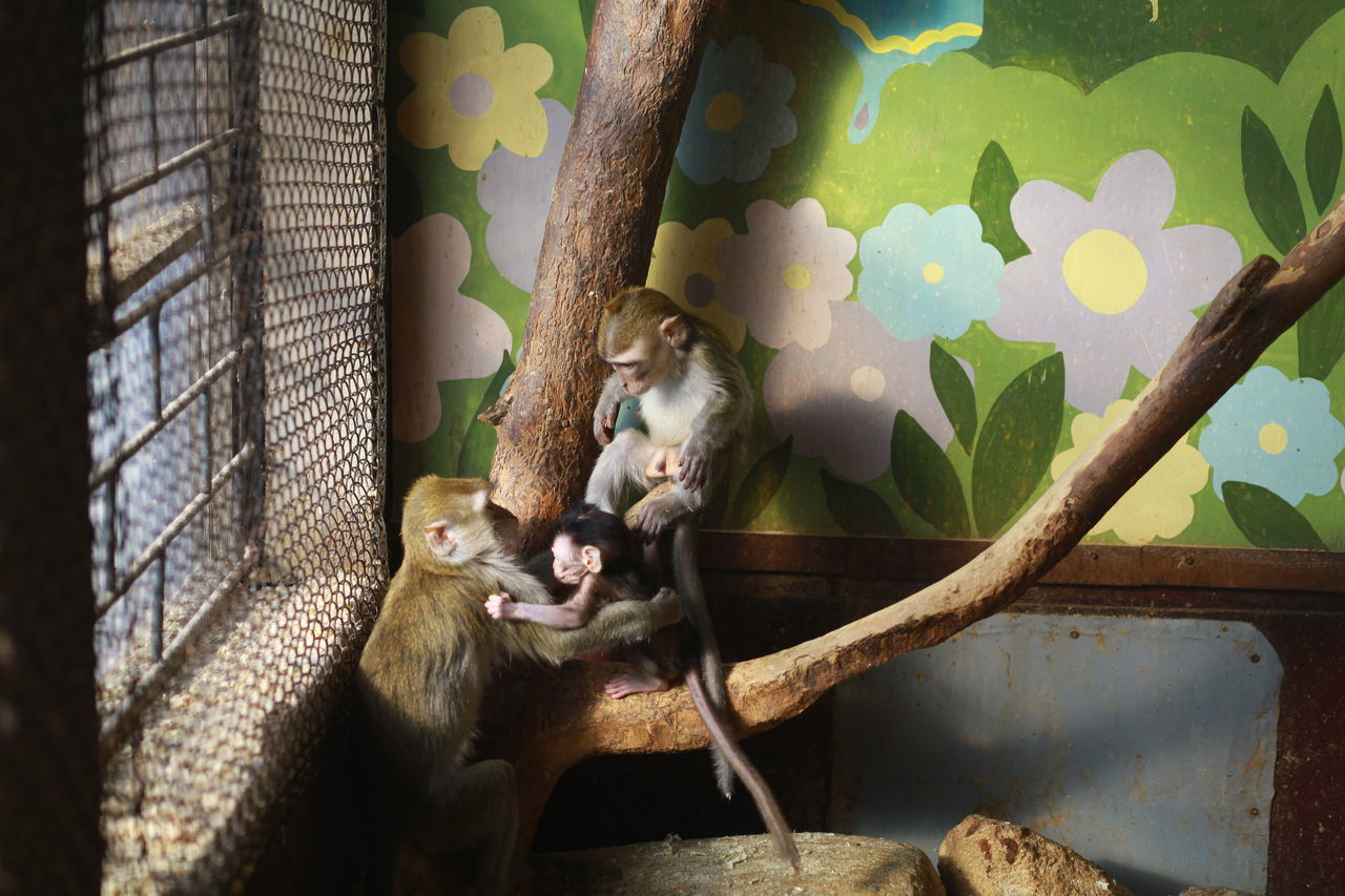 Animal Themes Cage Captivity Family Family Matters Family Time Friendship Full Length Mammal Monkey Monkey Family Monkeys One Animal Pets Sitting Togetherness Zoo Zoo Animals