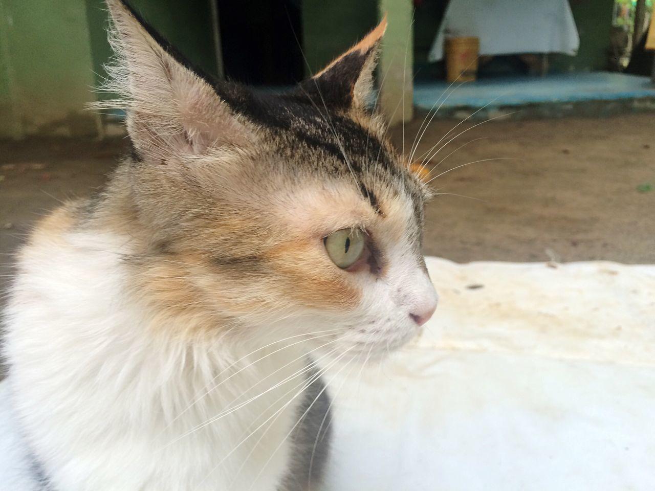 Gato😽 Cat♡ Pichirilo