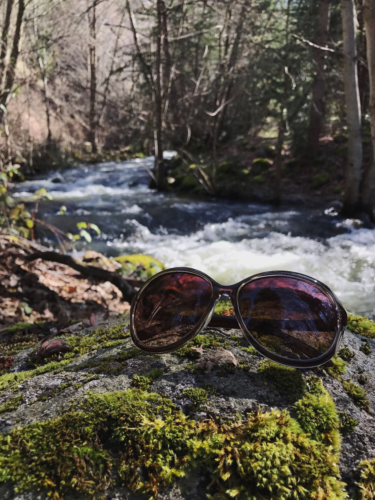Nature No People Outdoors Tree Tranquility Water Day Close-up Sunglasses Moss Ashland Oregon Lithia Park Sunglasses On Rock Green Tones Creekside