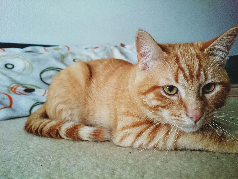 Beauyiful Animals My Beautiful Cat! Lovethispet Relaxing Time