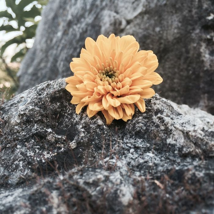 Yellow Flower Lovely MyPhotography Iphonegraphy 📱💕 Nature
