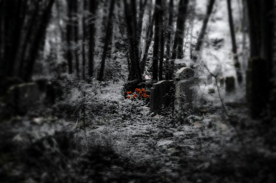 Nature On Your Doorstep Walking Around The Cemetery Bristol Uk Nature Beauty Urban Landscape Black And White With A Splash Of Colour Rundown Cemetery