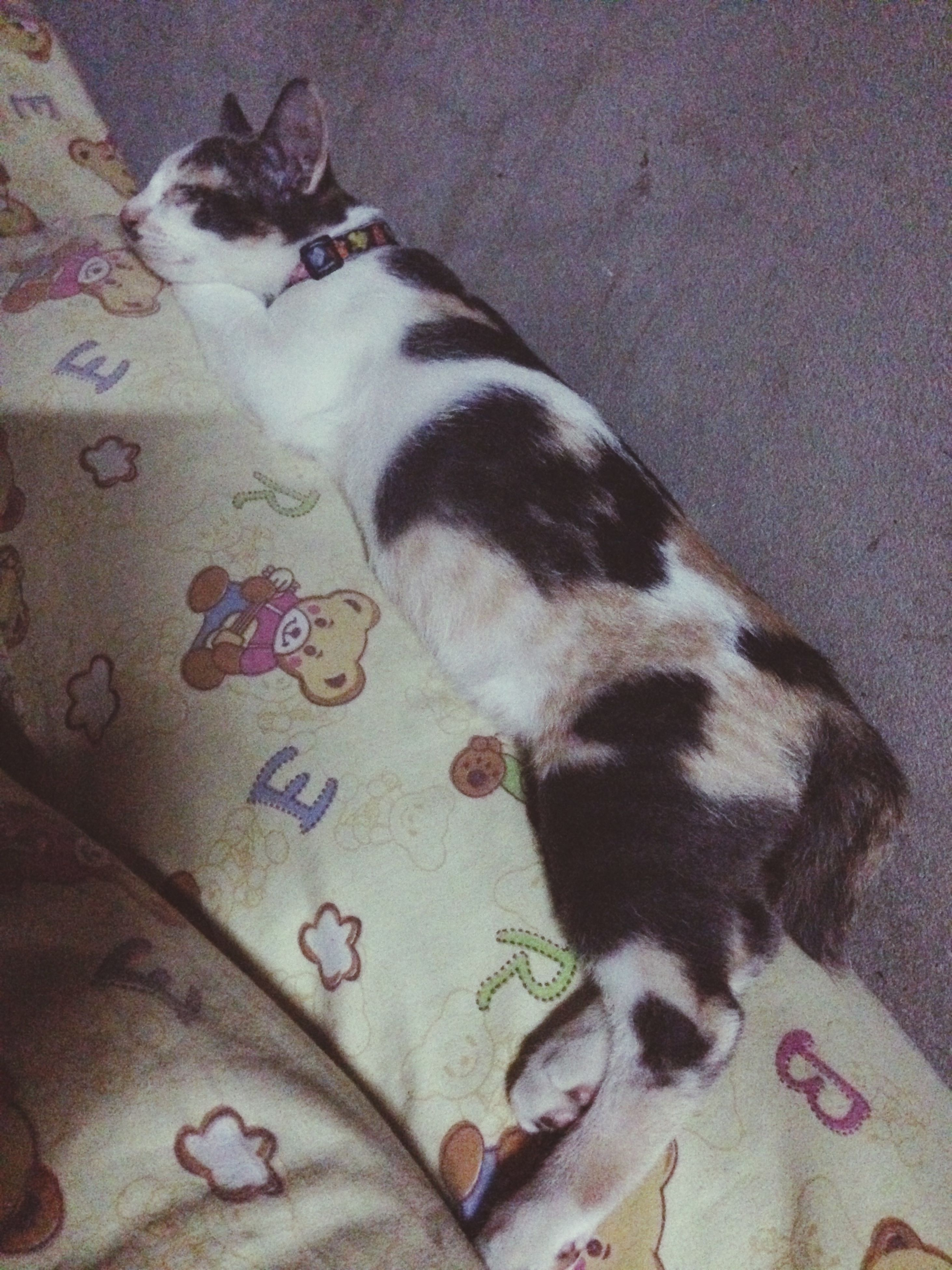 pets, domestic animals, animal themes, mammal, one animal, indoors, relaxation, domestic cat, cat, sleeping, lying down, dog, resting, high angle view, feline, home interior, bed, eyes closed, flooring, no people