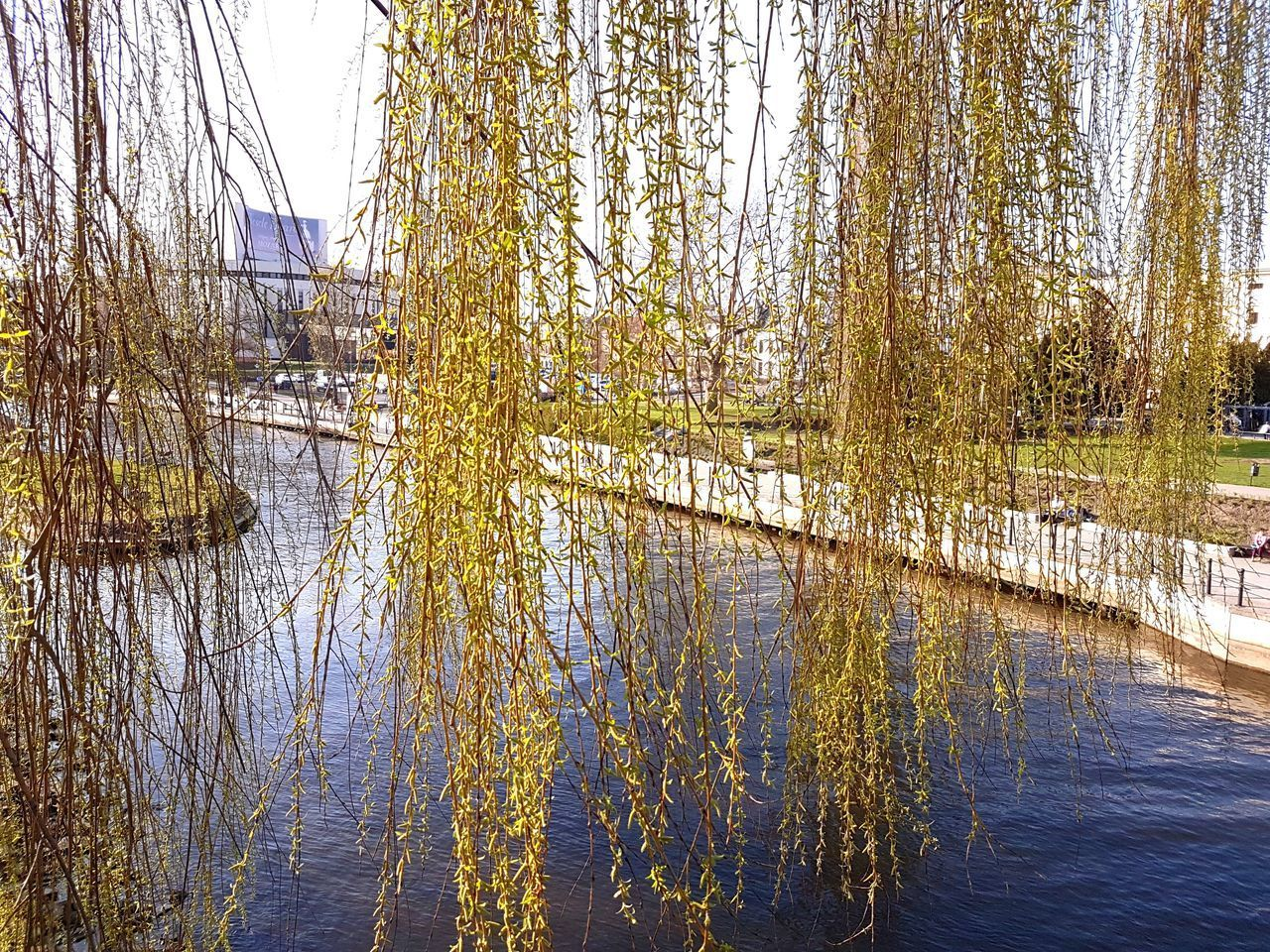 Full Frame Tree No People Water Nature Growth Day Outdoors Close-up Poland Bydgoszcz Travel Destinations River Reflection Backgrounds Sky Gold Colored Beauty In Nature Scenics Refraction Frosted Glass Spring